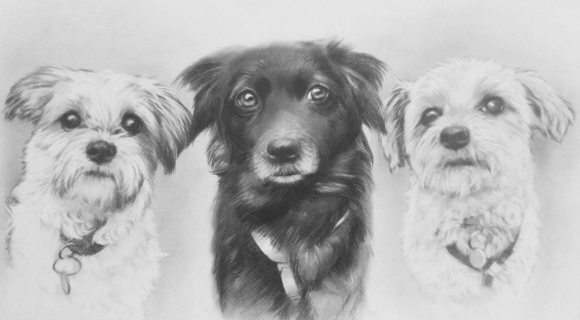 kutya portré rajz